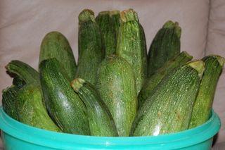 Zucchini 006