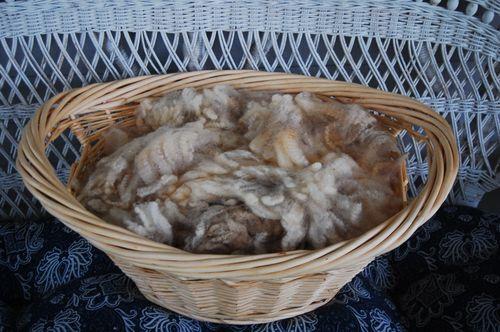 Wool 120